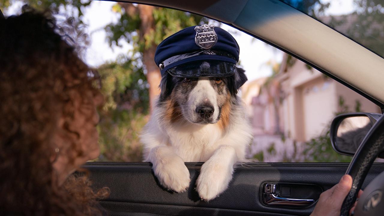 Обои для рабочего стола собака Полицейские Смешные Шляпа окна животное Собаки полицейский полицейская полицейский смешной смешная забавные шляпы шляпе Окно Животные