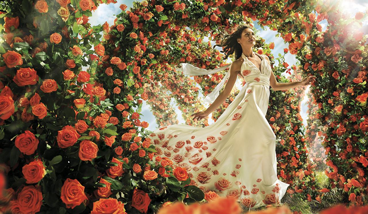 Фотография роза девушка цветок Много Платье Розы Девушки молодые женщины молодая женщина Цветы платья