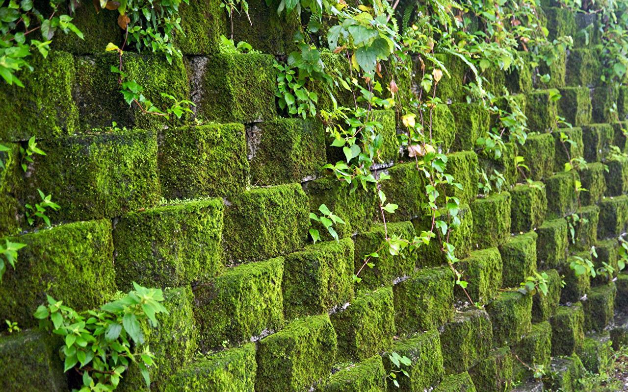 Картинки Природа мхом Камни Стена вблизи мха Мох стены стене Камень стенка Крупным планом