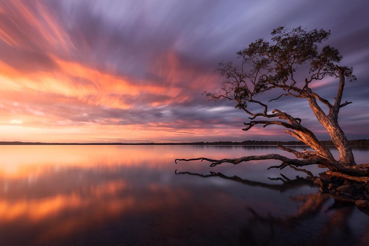 Фотография Австралия Lake Weyba Природа Озеро Рассветы и закаты дерева рассвет и закат дерево Деревья деревьев