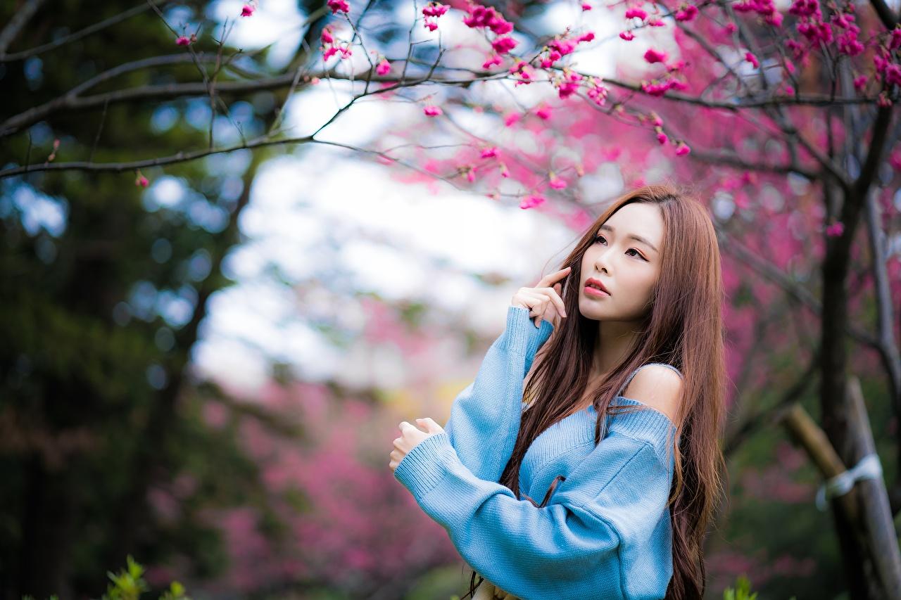 Обои для рабочего стола шатенки боке Поза Красивые Девушки Азиаты свитере Шатенка Размытый фон красивый красивая позирует девушка молодые женщины молодая женщина Свитер свитера азиатки
