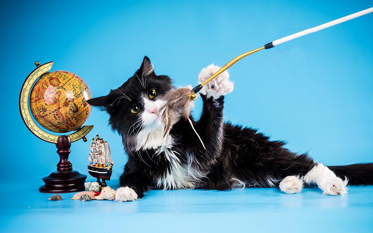 Фотографии Кошки черная Игрушки Животные кот коты кошка Черный черные черных игрушка животное