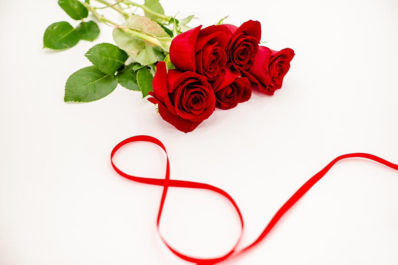 Картинки Международный женский день Розы Красный Цветы 8 марта