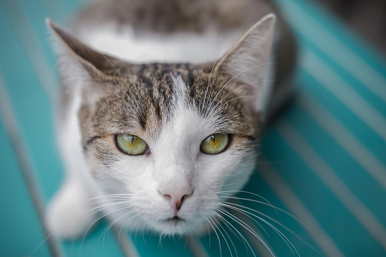 Фотография Кошки Усы Вибриссы Морда Взгляд Животные кот коты кошка морды смотрит смотрят животное
