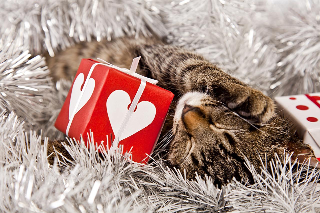 Картинки кошка Рождество Кубик спят Подарки животное кот коты Кошки Новый год куб кубики сон Спит спящий подарок подарков Животные