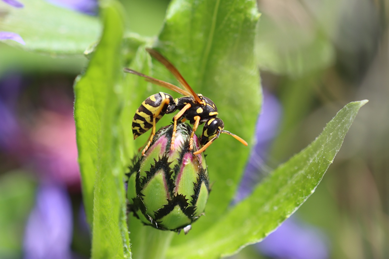 Фотография Оса Насекомые Размытый фон вблизи Животные осы насекомое боке животное Крупным планом