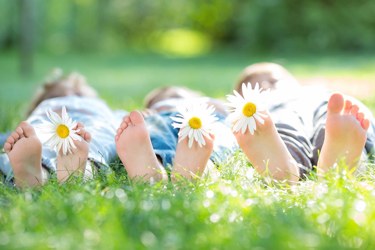 Фото Пятка лежачие боке ребёнок ног ромашка Трава втроем лежа Лежит лежат Размытый фон Дети Ноги Ромашки три траве Трое 3