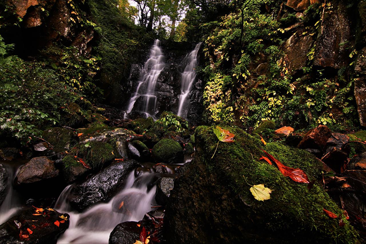 Картинки Листья Япония Fudotaki Falls Katsuyama Скала Природа Водопады Мох Камни Листва Утес Камень
