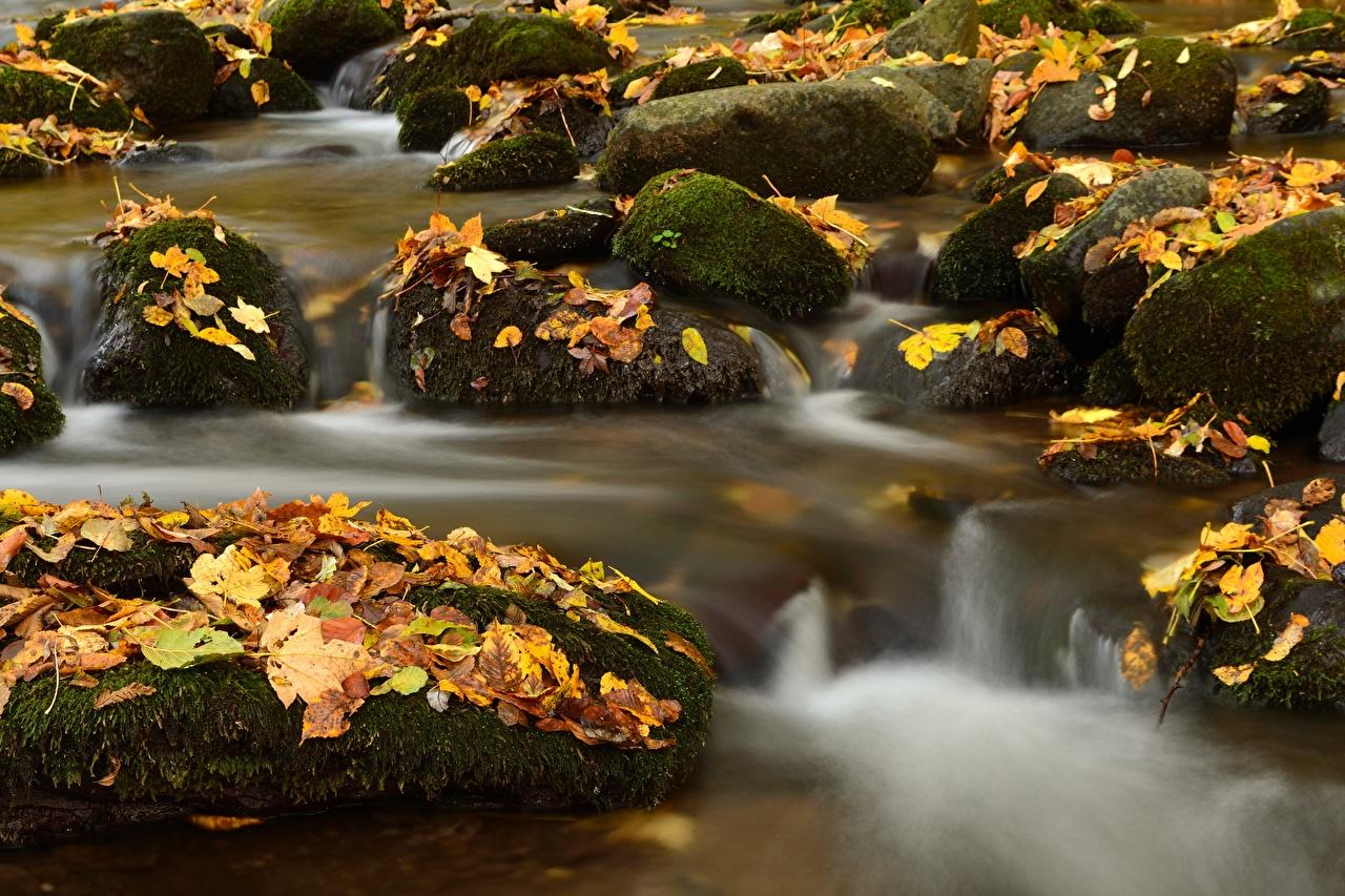 Обои для рабочего стола Листва Ручей Природа осенние Мох Камень лист Листья Осень ручеек мха мхом Камни