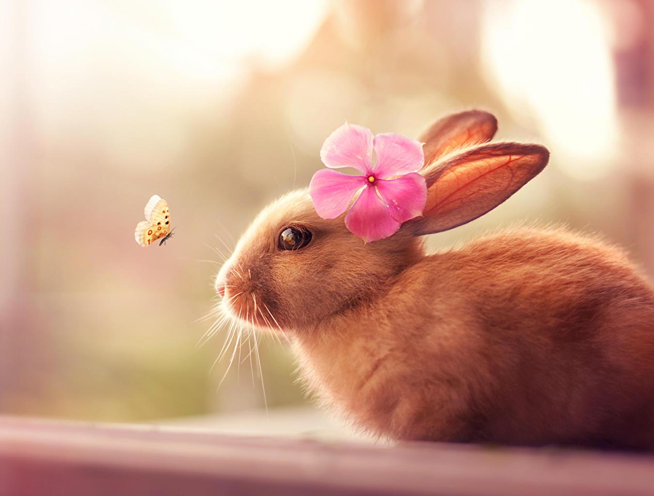 Фотография кролик бабочка животное Бабочки Кролики Животные