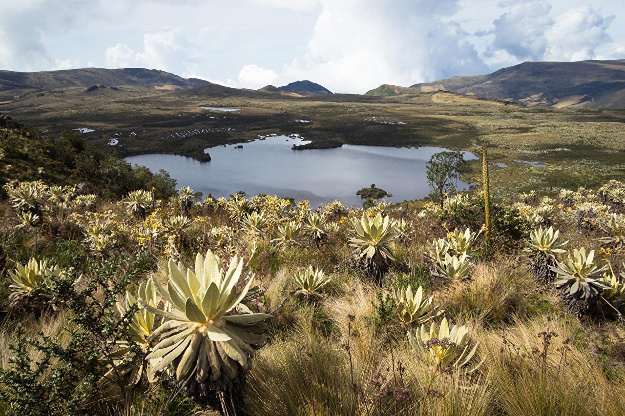 Фотография Колумбия Природа Озеро холмов холм Холмы