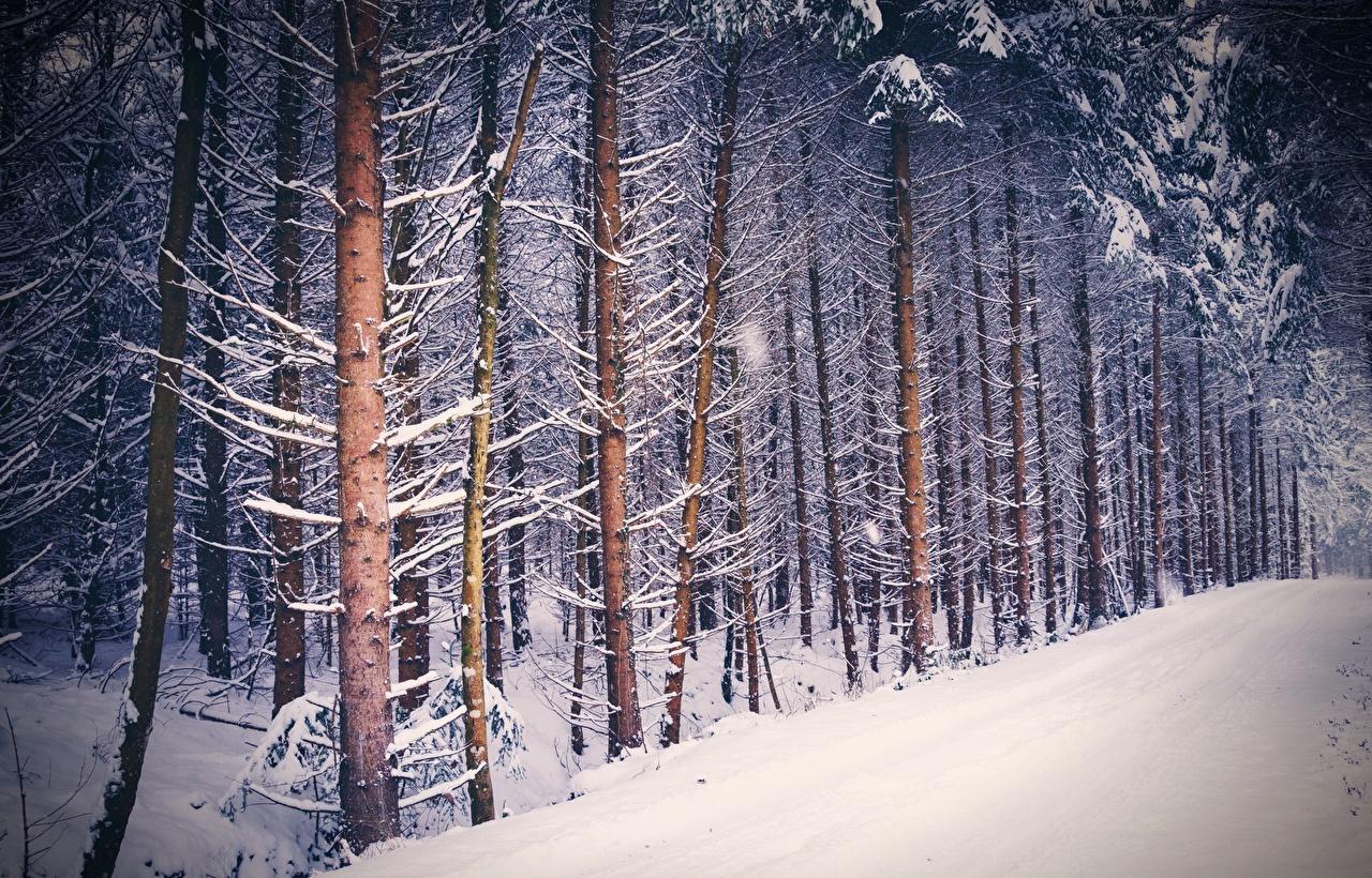 Обои для рабочего стола Природа лес снеге дерево Леса Снег снега снегу дерева Деревья деревьев