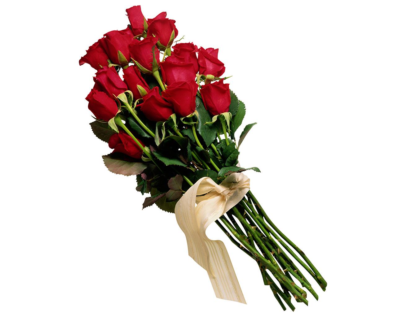 Картинки Букеты Розы Бордовый цветок ленточка Белый фон букет роза бордовая бордовые темно красный Цветы Лента белом фоне белым фоном
