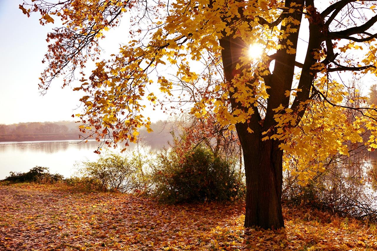 Фото Лучи света лист Природа осенние Деревья Листья Листва Осень дерево дерева деревьев