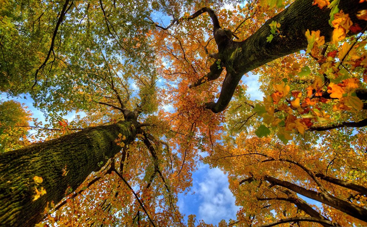 Обои для рабочего стола Вид снизу Осень Природа Ствол дерева Ветки осенние ветвь ветка на ветке