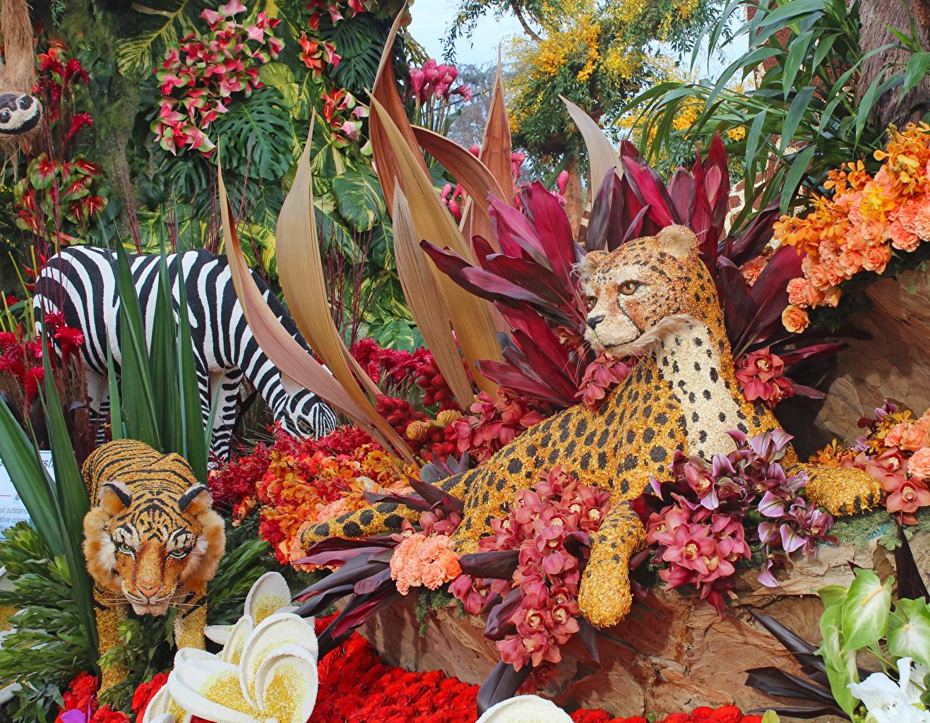 Картинки Тигры Pasadena Розы Природа Орхидеи Дизайн