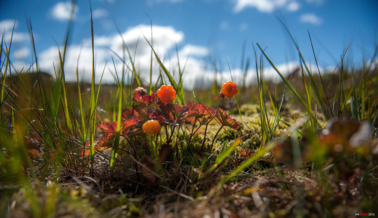 Картинка Размытый фон Природа Ягоды Трава боке траве