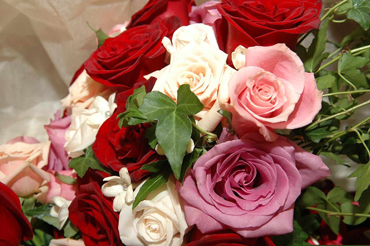 Картинки букет Розы Цветы вблизи Букеты роза цветок Крупным планом
