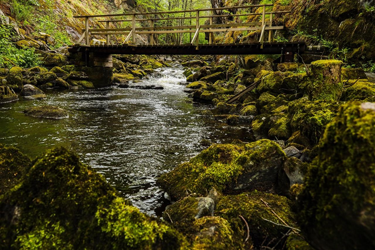 Фотографии Мосты Природа мха река Камень мост Мох Реки мхом речка Камни