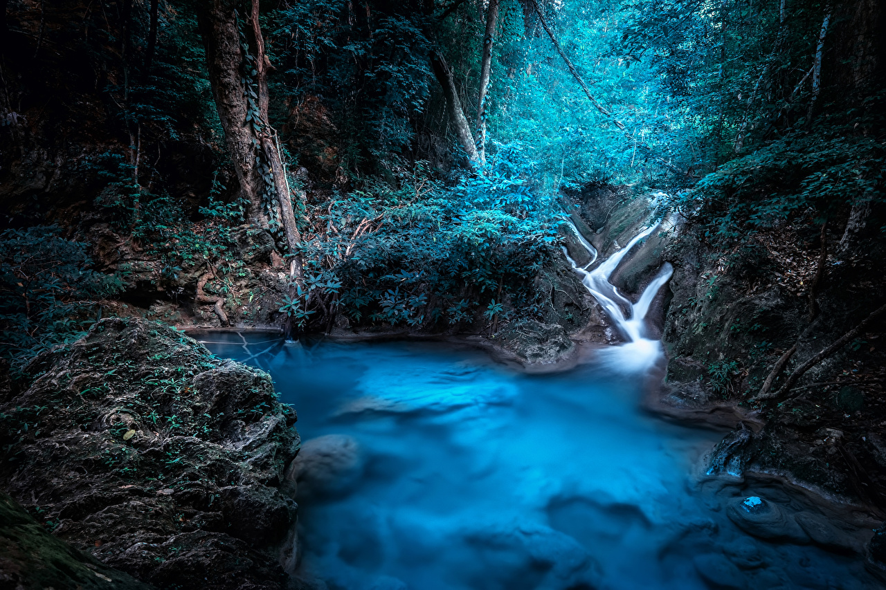 Фотография Таиланд Kanchanaburi Природа Леса Тропики