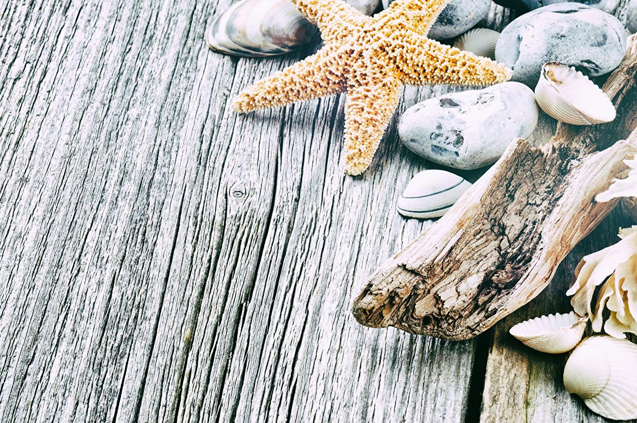 Картинка Морские звезды Ракушки Камни вблизи Доски Камень Крупным планом