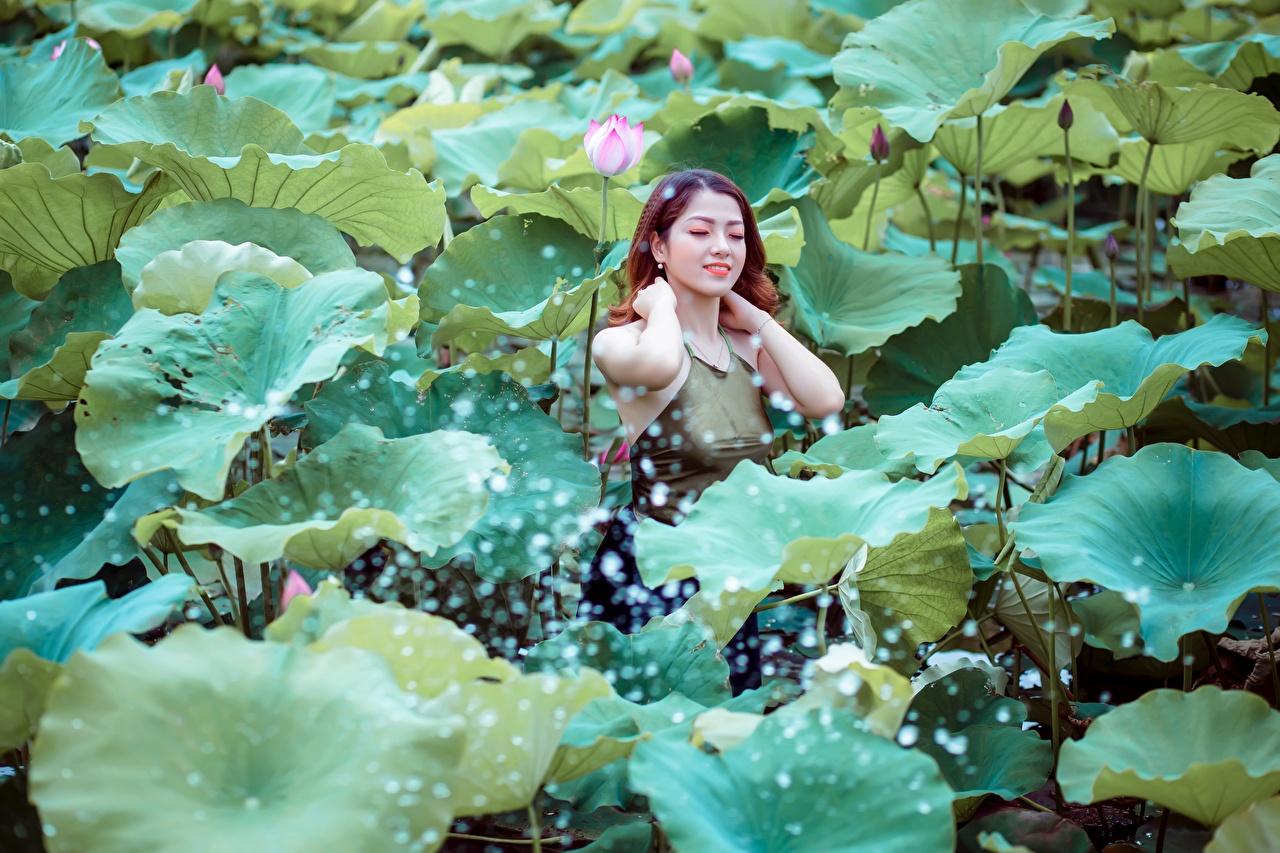 Картинки Листья шатенки Девушки Лотос азиатки лист Листва Шатенка девушка молодая женщина молодые женщины Азиаты азиатка