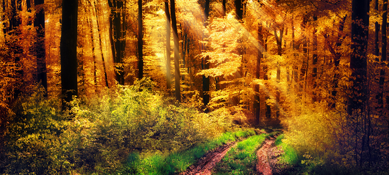 Обои для рабочего стола Лучи света тропы осенние Природа лес дерева кустов Осень Тропа тропинка Леса Кусты дерево Деревья деревьев