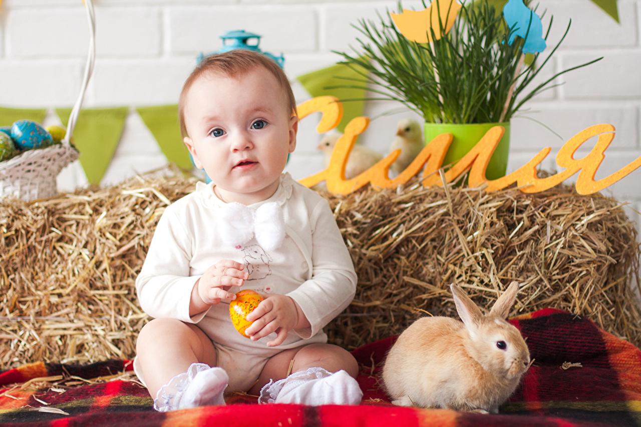 Картинки Пасха Кролики Младенцы Ребёнок Праздники грудной ребёнок Дети