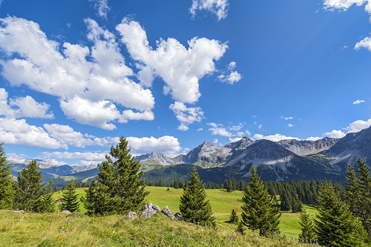 Картинки Швейцария Jakobshorn Davos Ель Горы Природа Небо Луга Пейзаж облачно ели гора облако Облака