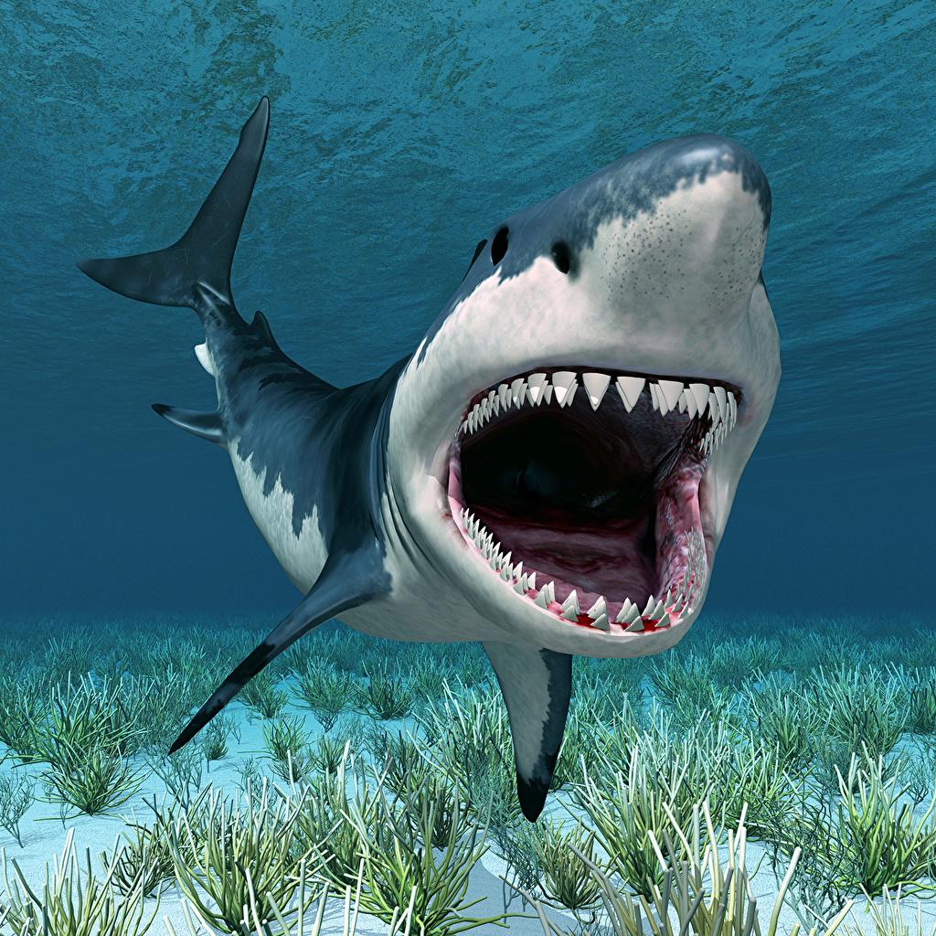 Картинки Акулы Подводный мир 3д Зубы Животные 3D Графика животное