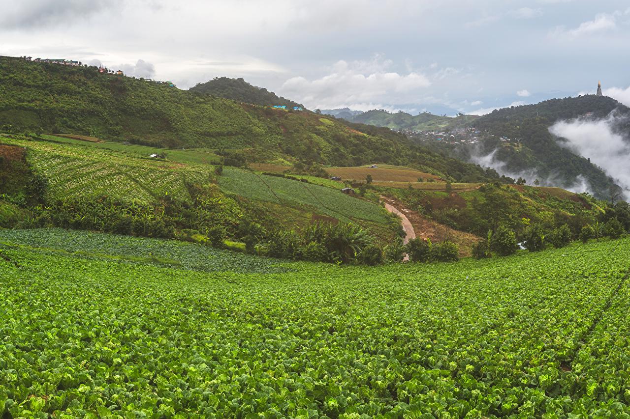 Фотографии Вьетнам Mu Cang Chai Природа Поля Холмы холм холмов