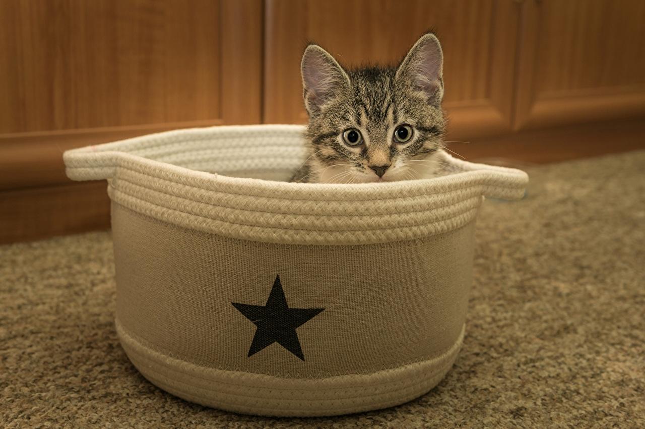 Фотография котенок Кошки Звездочки головы Взгляд Животные котят Котята котенка кот коты кошка Голова смотрят смотрит животное