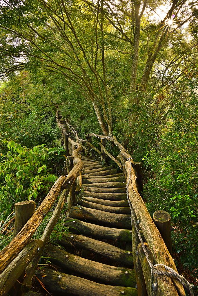 Картинка мост бревно Природа лес  для мобильного телефона Мосты Бревна Леса