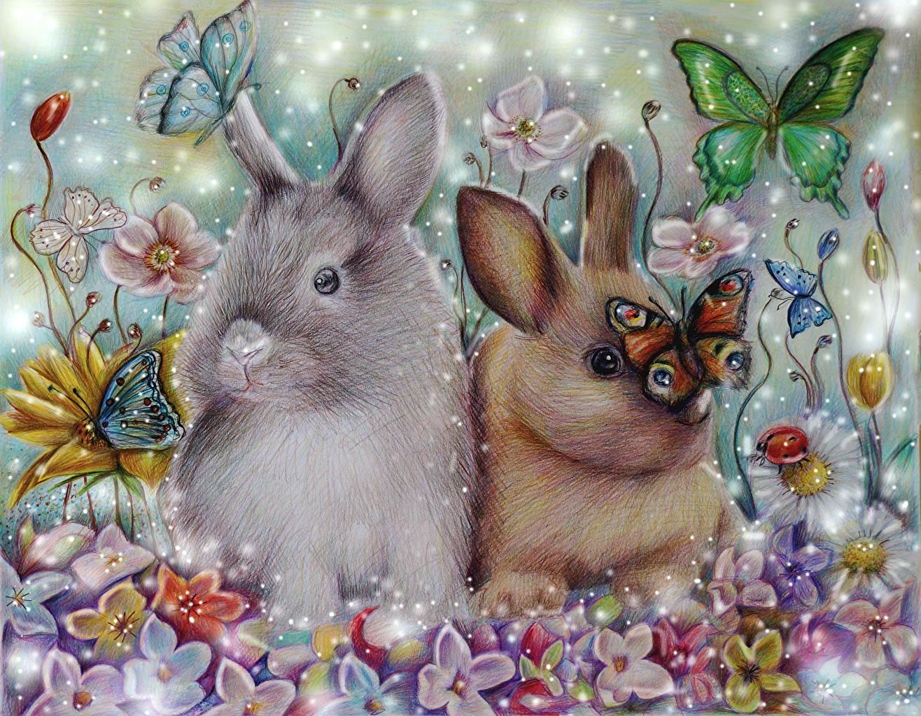 Фотографии Зайцы Бабочки животное Рисованные бабочка Животные