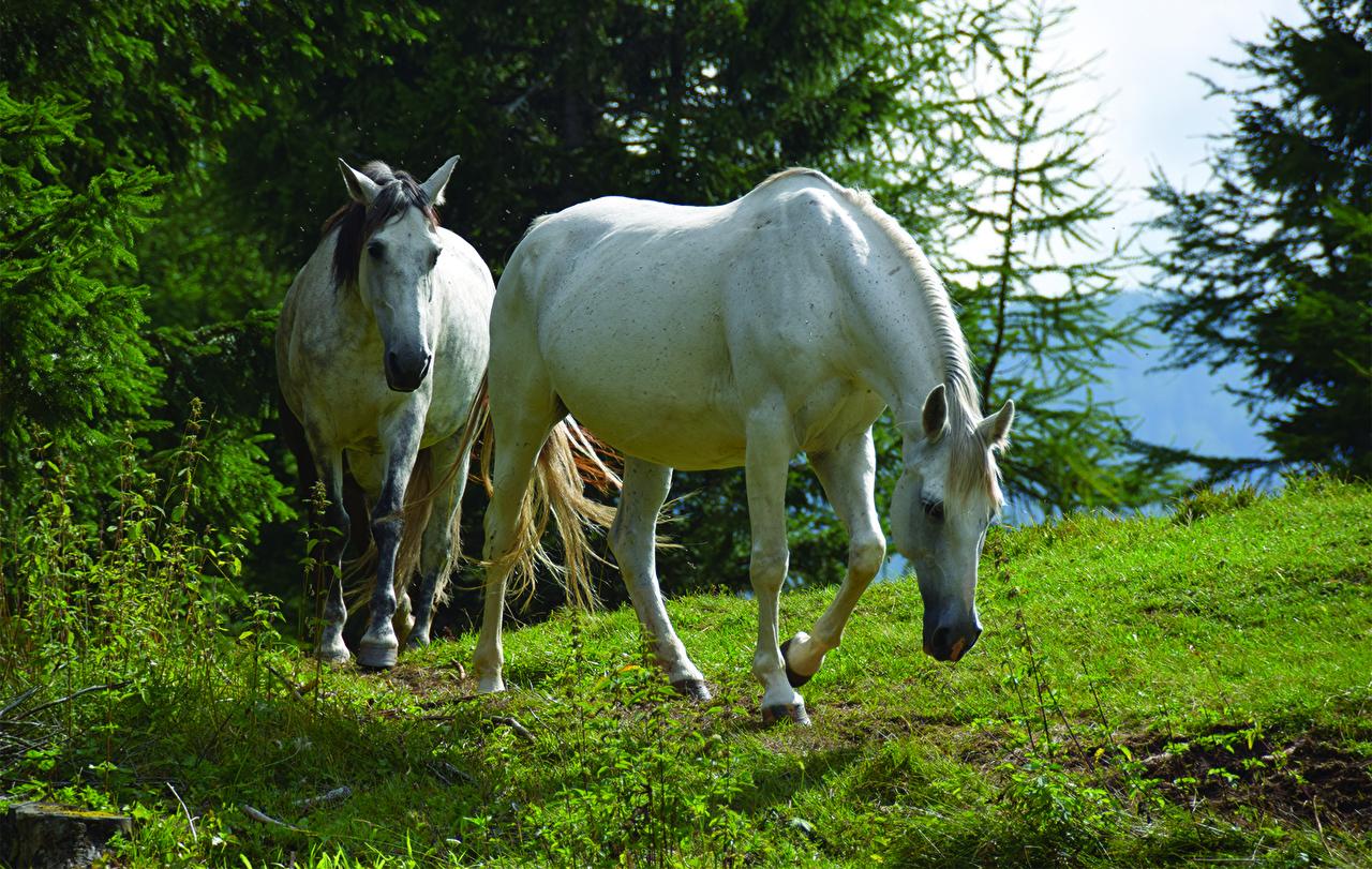 Фотографии лошадь вдвоем Трава Животные Лошади 2 два две Двое траве животное