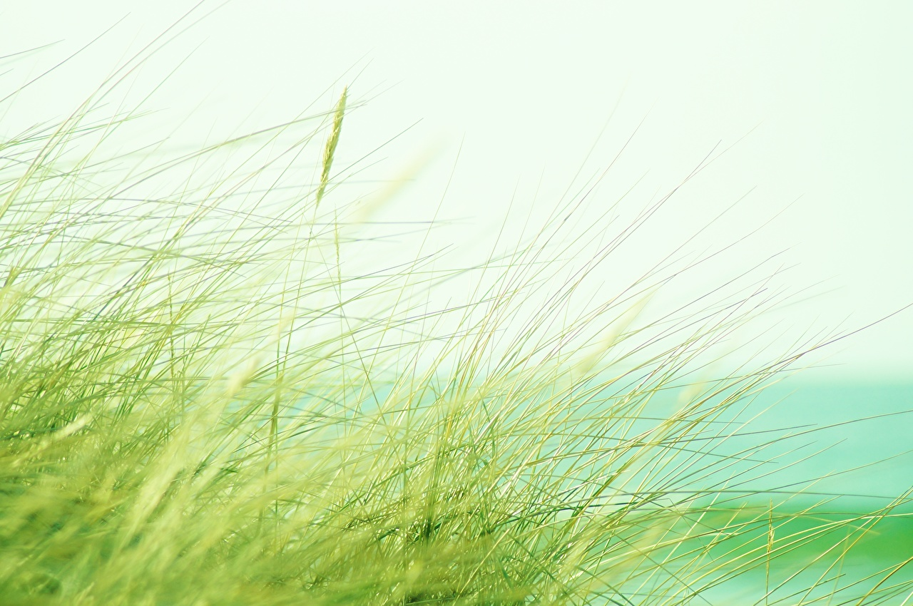 Обои для рабочего стола Природа траве Крупным планом Трава вблизи