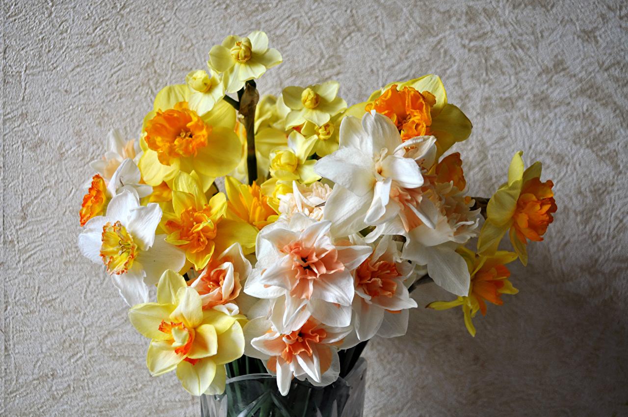 Фотография букет Цветы Нарциссы Букеты цветок