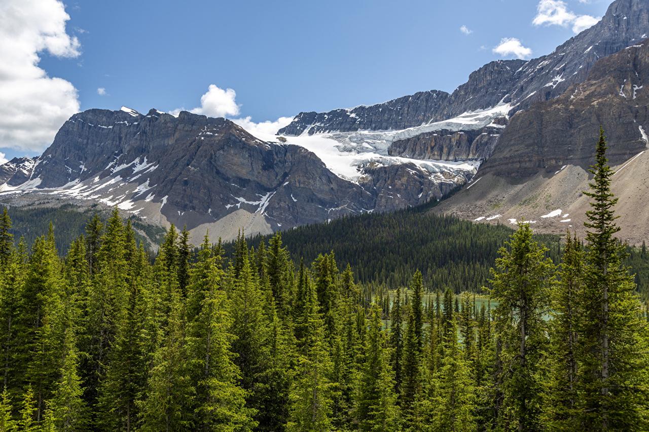 Картинка Банф Канада гора Природа парк Леса снега Горы лес Снег Парки снегу снеге