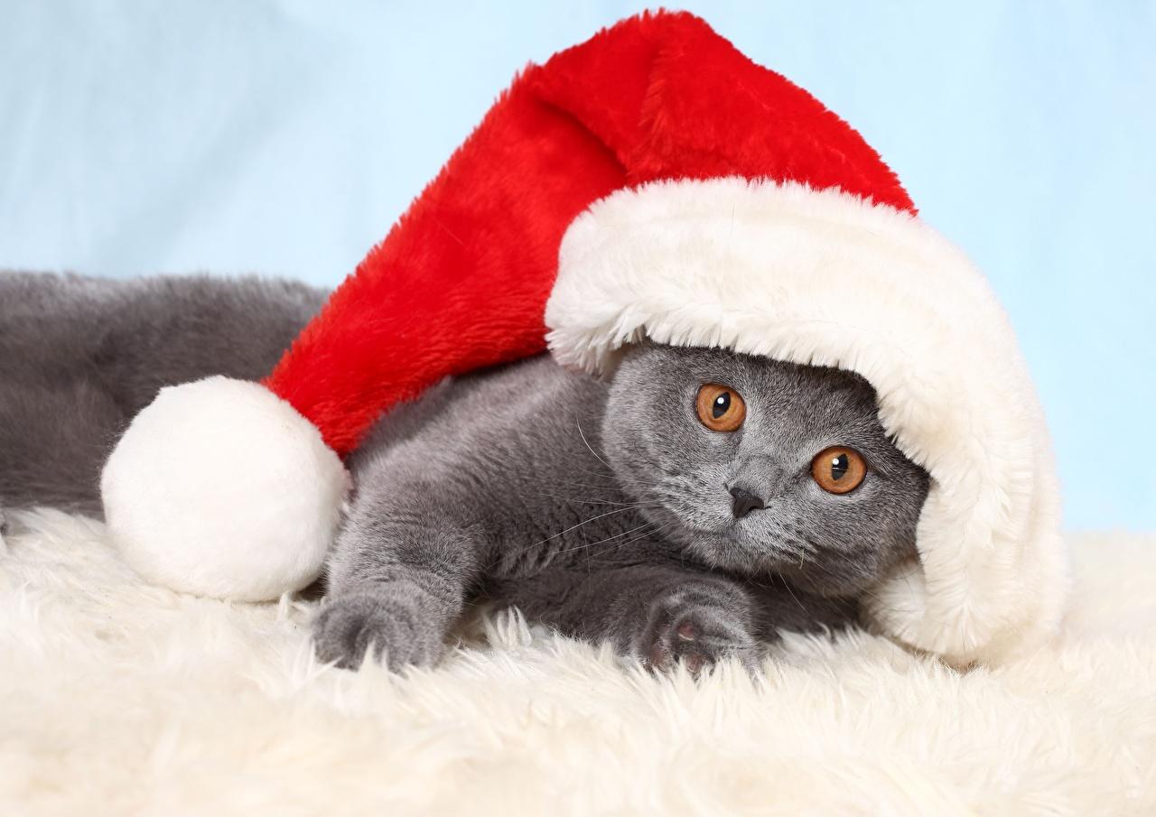 Фотографии Котята кошка Новый год лежа Смешные Шапки животное котят котенка котенок кот коты Кошки Рождество Лежит лежат лежачие смешной смешная забавные шапка в шапке Животные