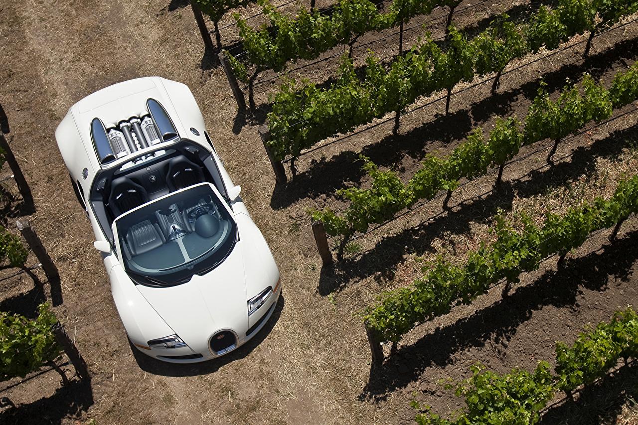 Фотография BUGATTI 2008-12 Veyron Grand Sport Roadster Родстер Кабриолет Белый Сверху автомобиль кабриолета белых белые белая авто машина машины Автомобили