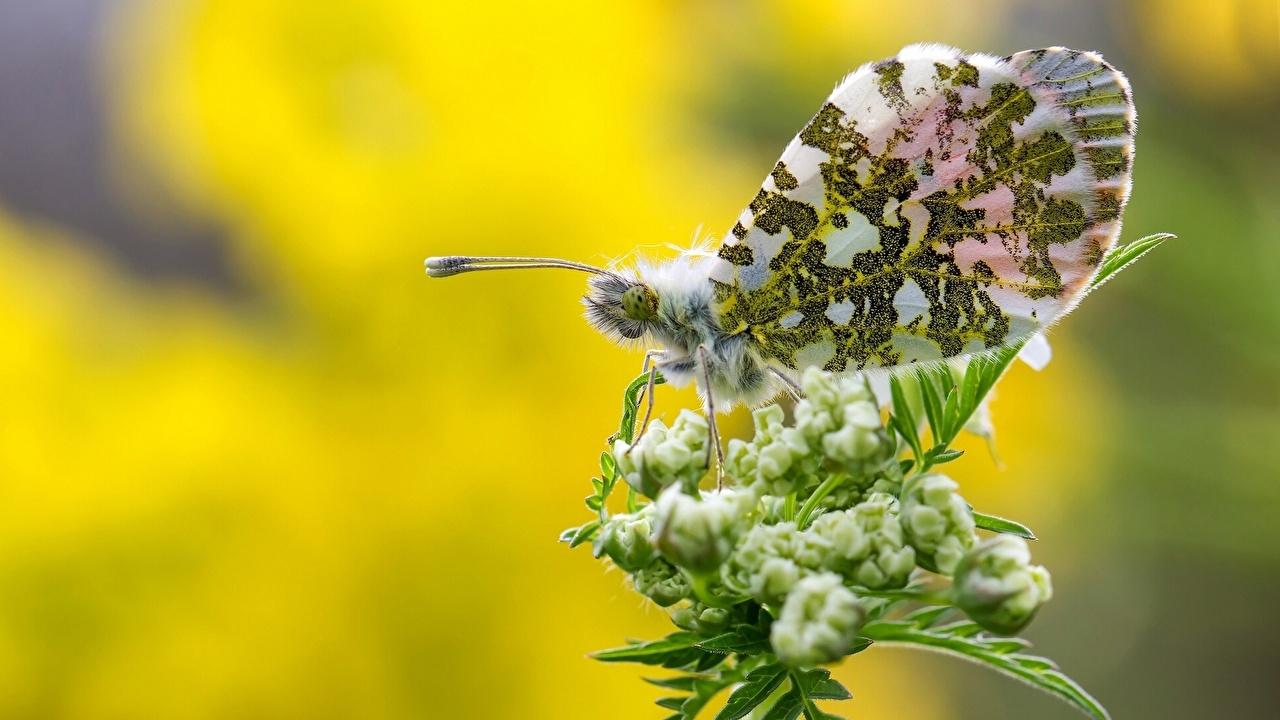 Обои для рабочего стола бабочка Животные Крупным планом Бабочки вблизи животное