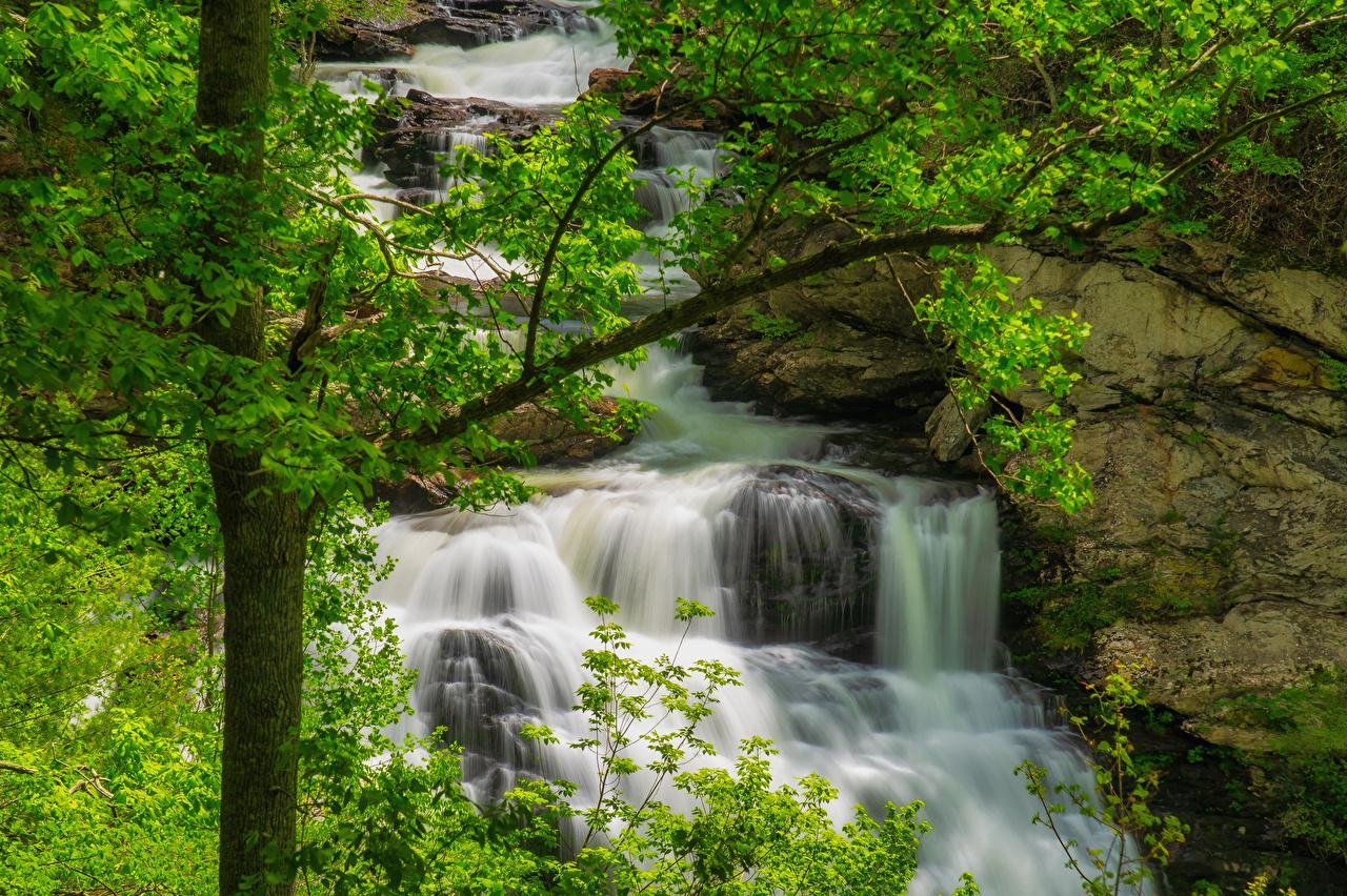 Фотографии США Great Smoky Mountains National Park Природа Водопады Парки ветвь штаты Ветки