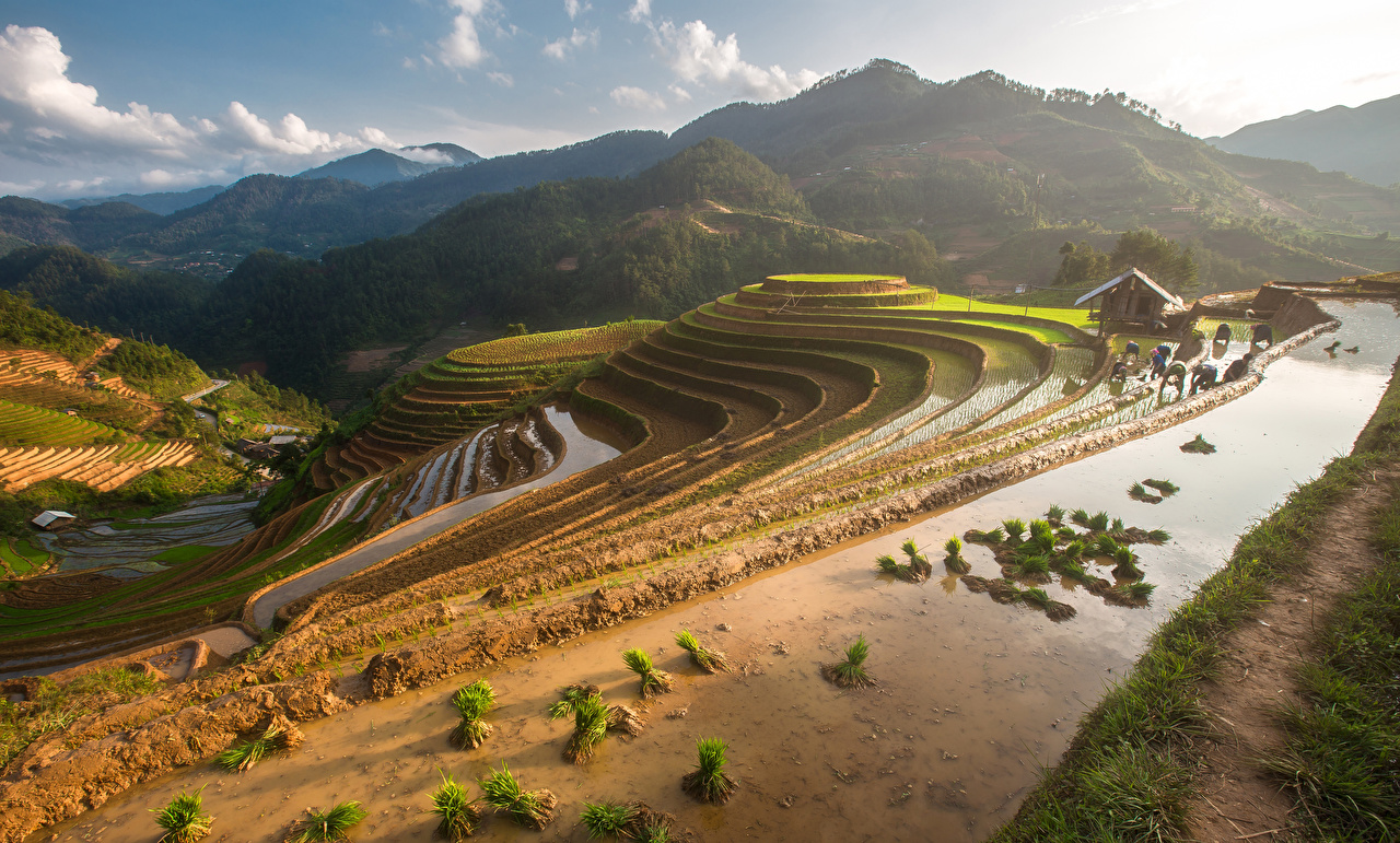 Фотография Вьетнам Mu Cang Chai гора Природа Поля Горы