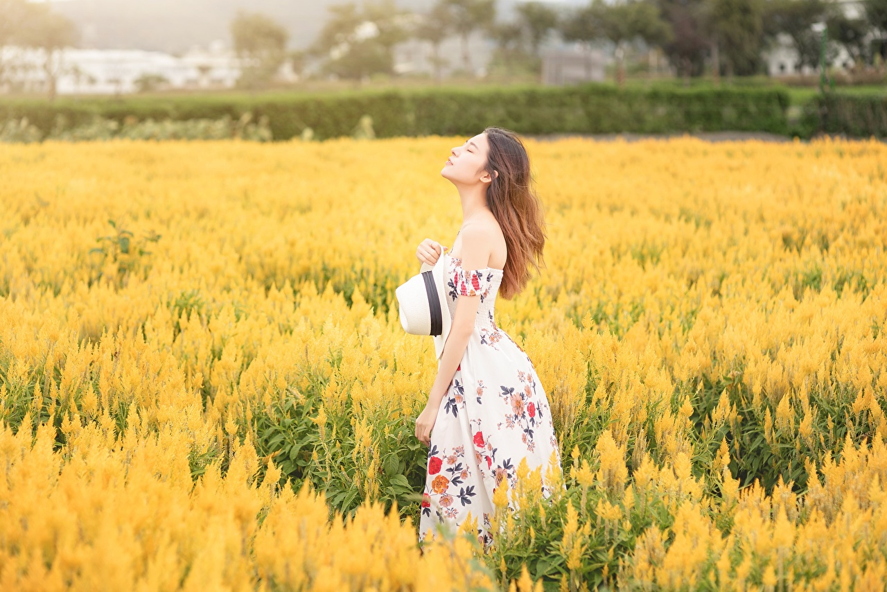 Картинки Шатенка боке Шляпа молодая женщина Поля азиатки Платье шатенки Размытый фон шляпы шляпе девушка Девушки молодые женщины Азиаты азиатка платья