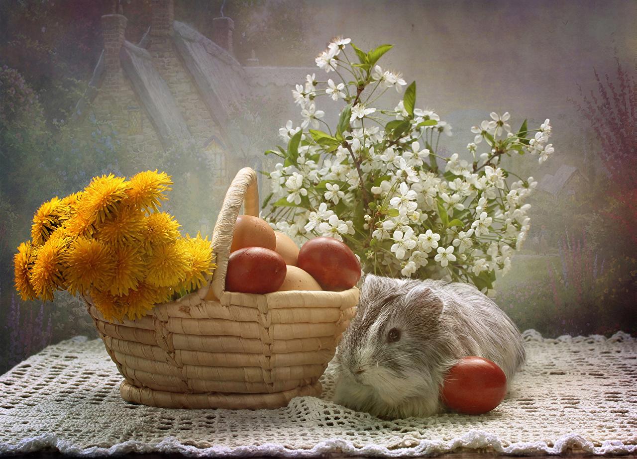 Фото Пасха Морские свинки яйцо корзины Одуванчики Ветки животное Праздники Натюрморт яиц Яйца яйцами Корзина Корзинка ветвь ветка на ветке Животные