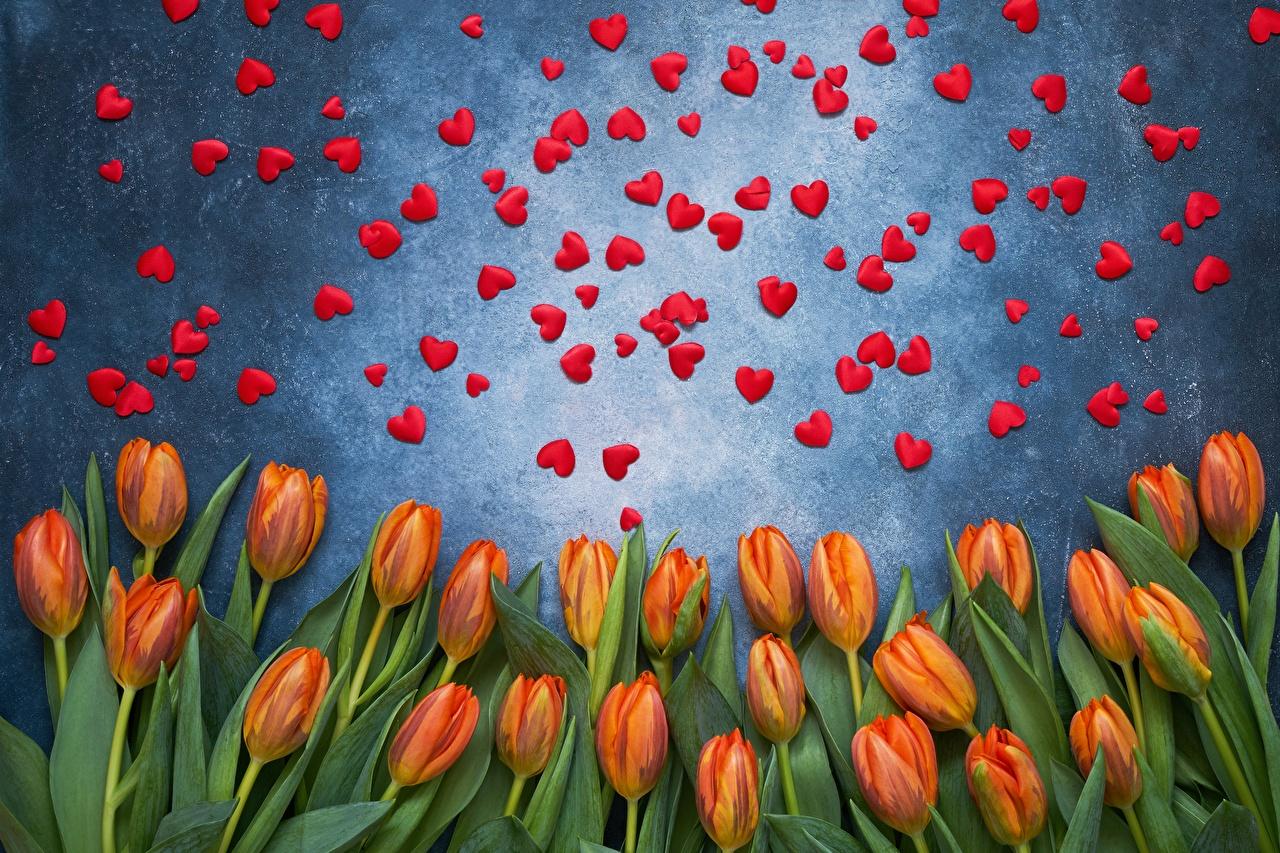 Фотография День святого Валентина сердечко Тюльпаны Цветы День всех влюблённых серце сердца Сердце