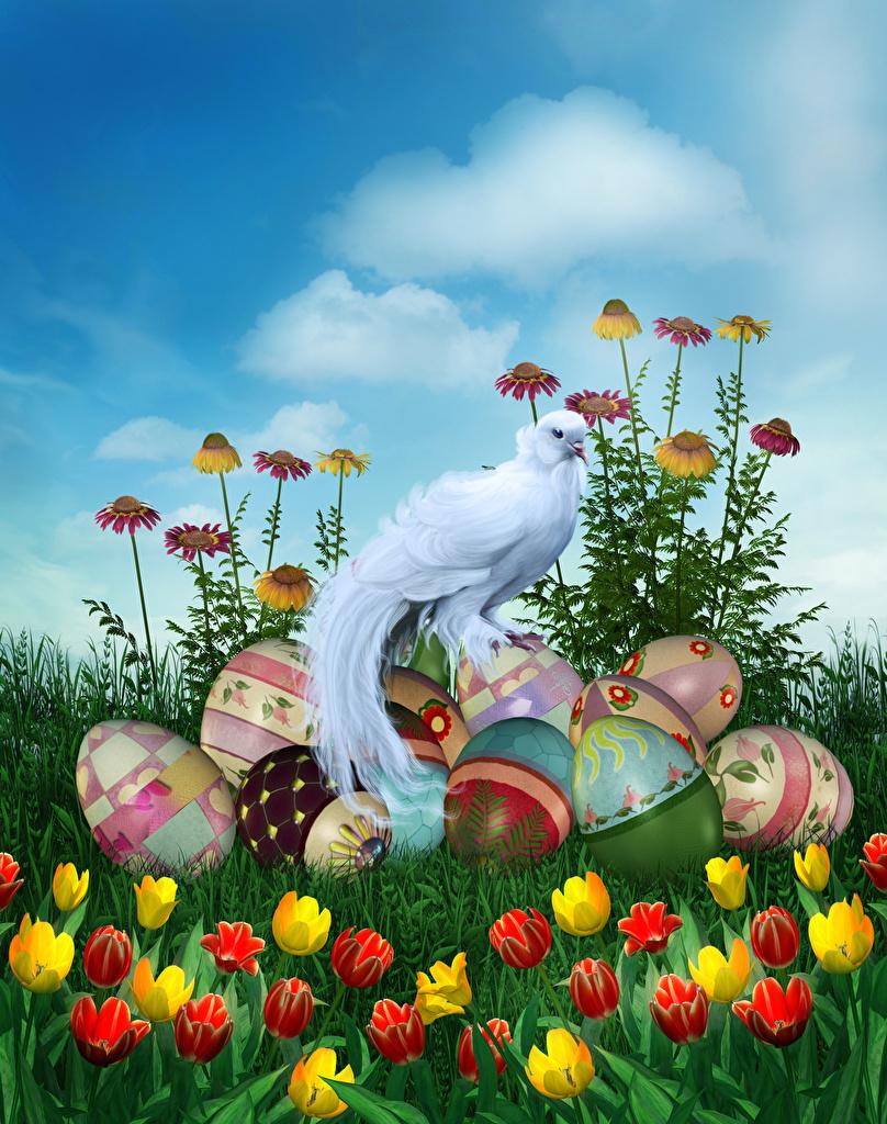 Обои для рабочего стола Пасха Птицы Яйца Тюльпаны цветок Праздники Дизайн  для мобильного телефона птица яиц яйцо яйцами тюльпан Цветы дизайна