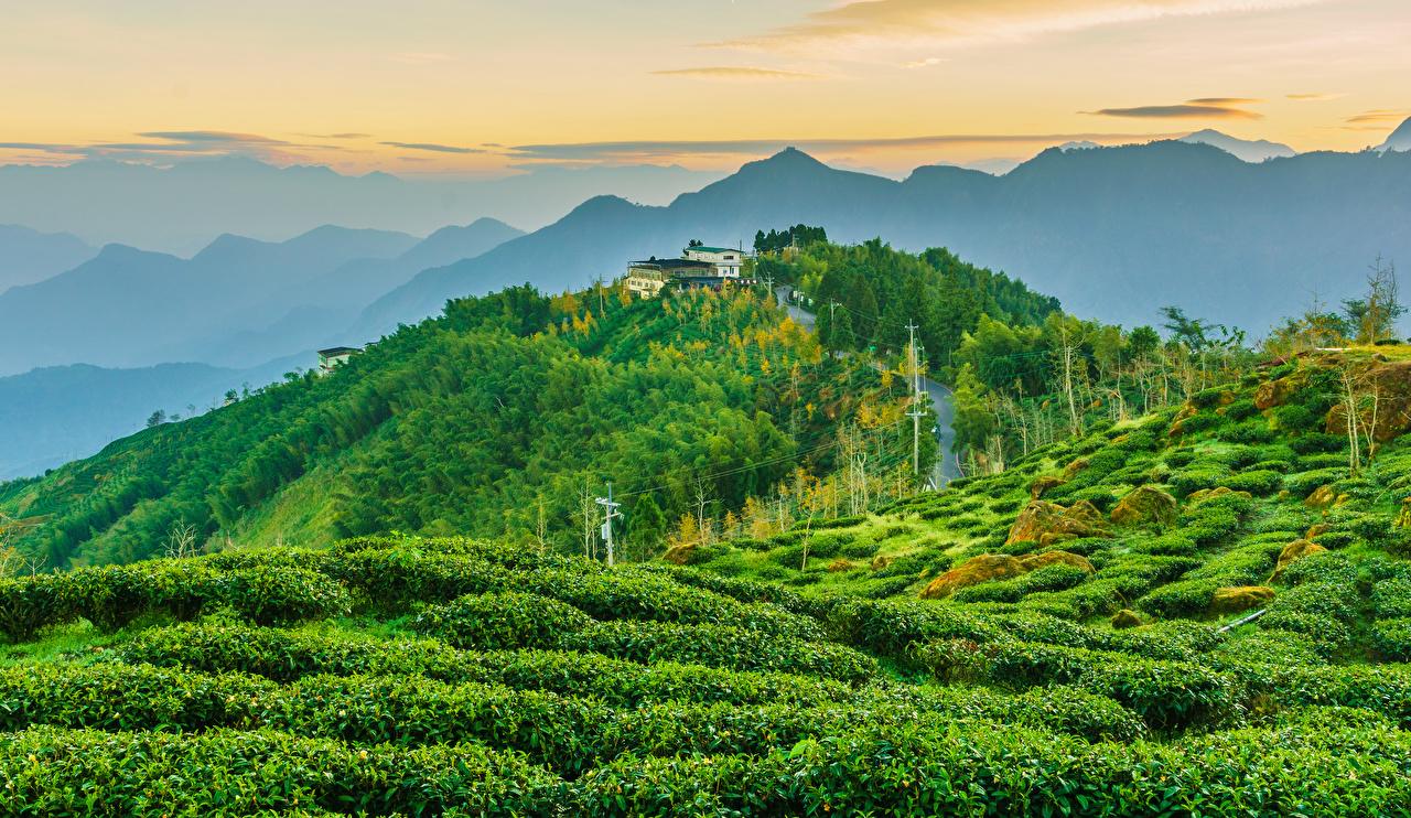 Обои для рабочего стола Тайвань гора Природа Поля холмов Дома кустов Горы холм Холмы Кусты Здания