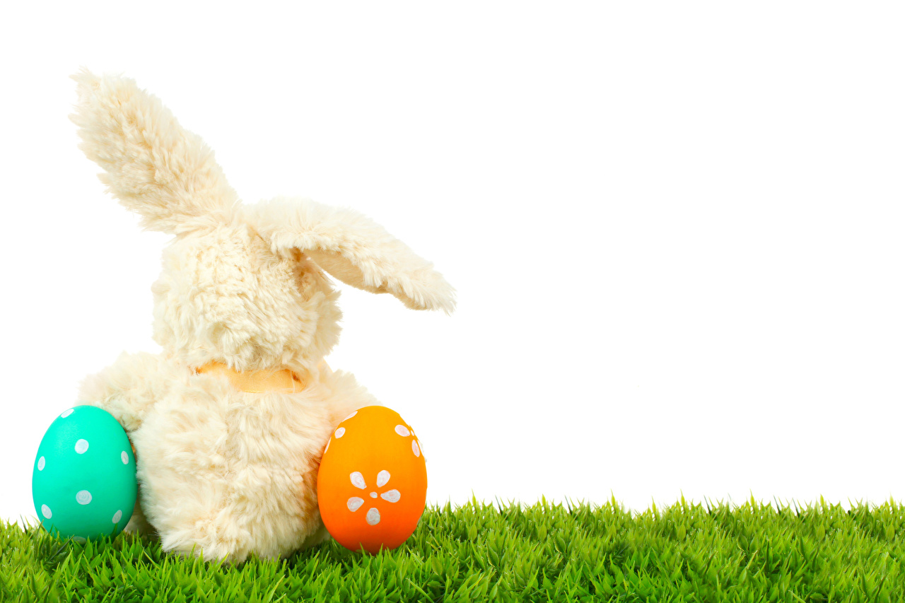 Картинки Пасха Кролики яйцами Сзади Трава Белый фон кролик яиц Яйца яйцо траве вид сзади белом фоне белым фоном