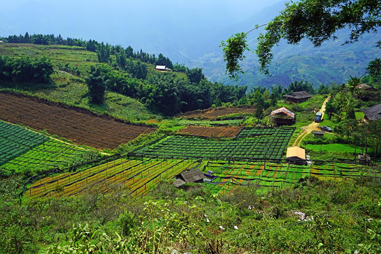 Картинка Вьетнам Muong Hoa Valley Sapa Природа Поля
